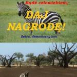 zebra-Mindestens